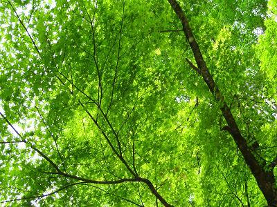 香嵐渓の新緑5.1