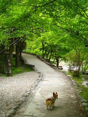 香嵐渓を歩く5.1