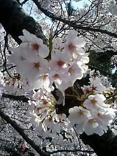 桜古城公園2