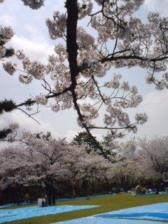 桜古城公園4