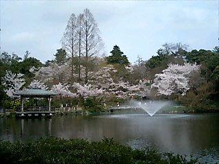 桜古城公園5