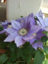 2008_0516(017).jpg
