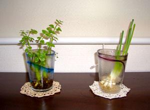 おケチな観葉植物