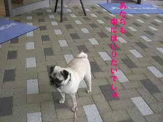 CIMG4616-1.jpg