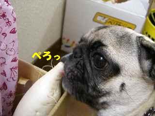 CIMG4636-1.jpg
