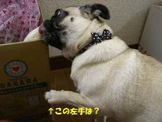 CIMG4662-1.jpg