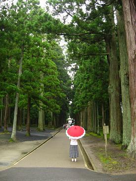 杉並木の参道