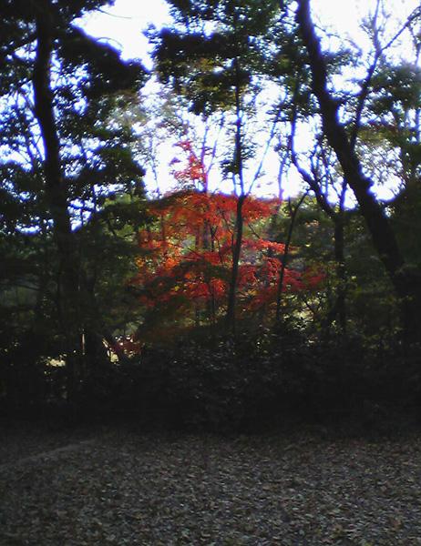 自然教育園②