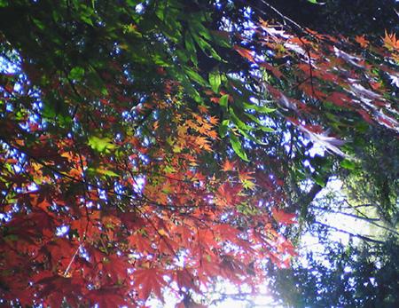 自然教育園④