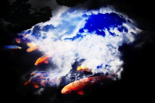 お空の上の鯉さん。