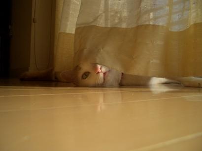 I.定点猫ずーこ Part2 ①