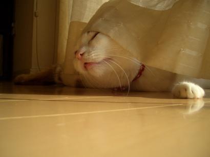 I.定点猫ずーこ Part2 ③