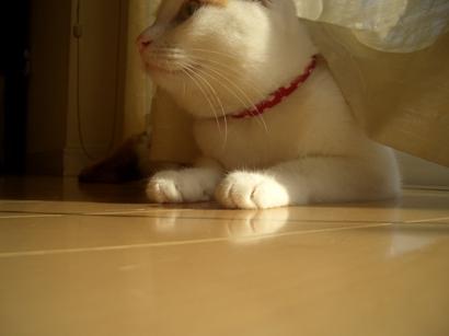 I.定点猫ずーこ Part2 ④