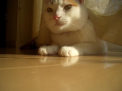 I.定点猫ずーこ Part2 ⑥