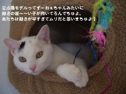 I.定点猫ずーこ Part2 ⑪