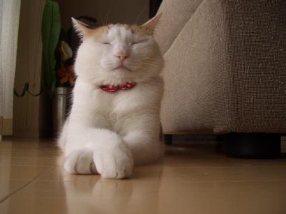 J.定点猫エル編^^ ①