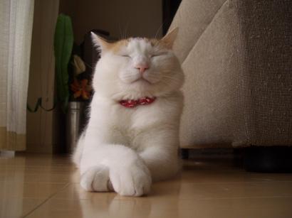J.定点猫エル編^^ ③