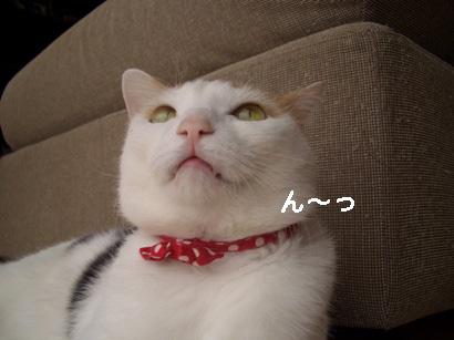 J.定点猫エル編^^ ⑦のコピー