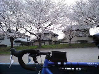 桜、初めて目に入りました。