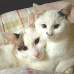 +albino+