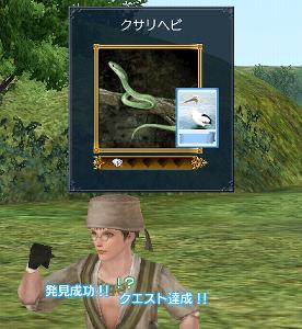 クサリヘビ