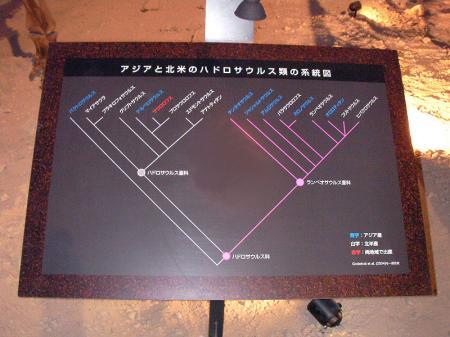 ハドロサウルス類の系統図パネル