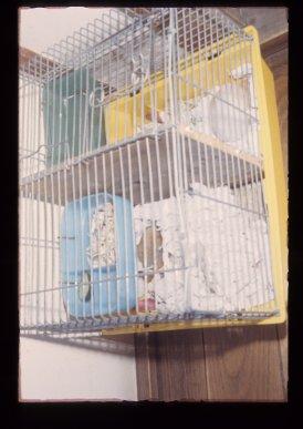 鳥かごの鳥
