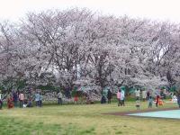 20080329-13.jpg