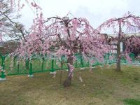 20080329-15.jpg
