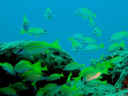 ラウラウビーチ漁礁