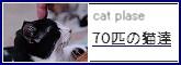 cat plase 70匹の猫達里親募集