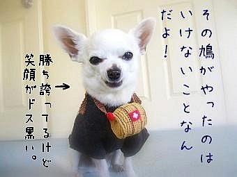 hatopuku.jpg