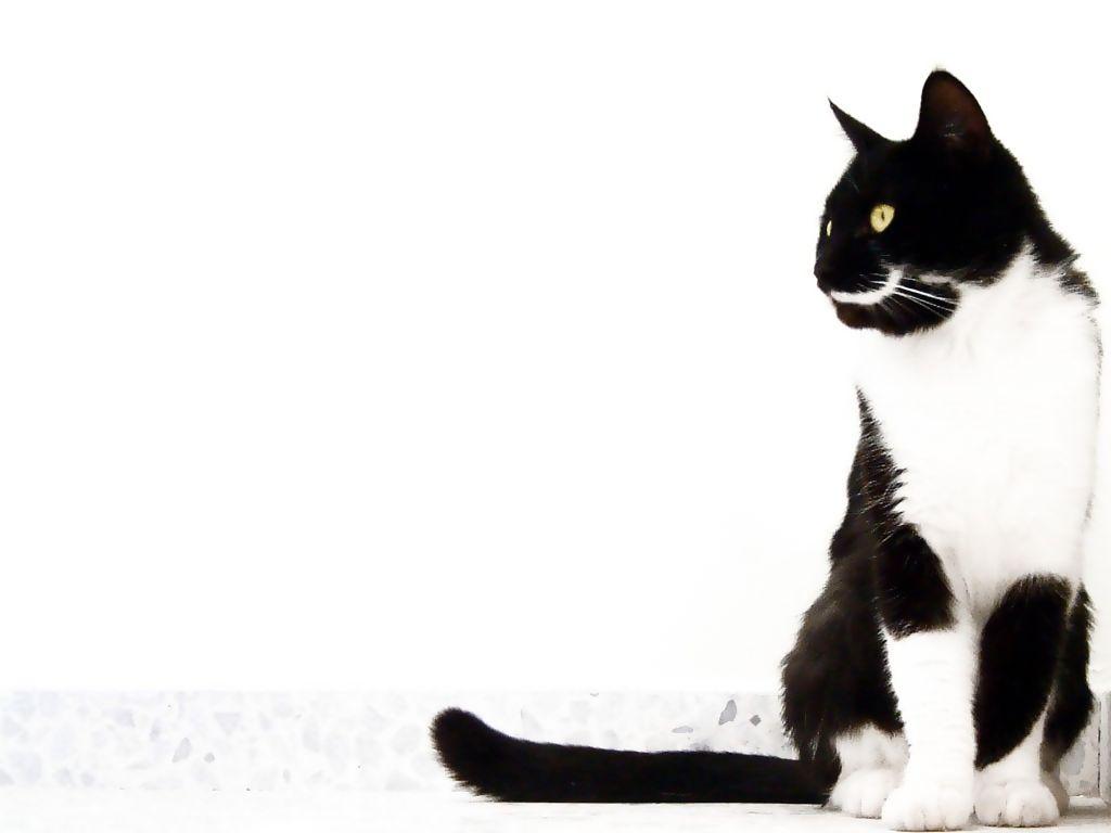 動物 かわいい猫 壁紙集 癒し画像 動物 かわいい猫 壁紙集