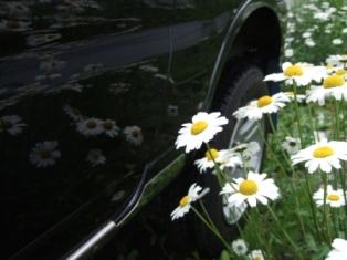朝から洗車
